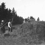 """Siena novākšana Paula Štreinerta (Sarmas) vecāku mājās Tiņģeres """"Ozolkalnos"""", 1920. gados."""