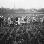 Biešu kaplēšana Lībagu pagasta Bētiņu māju laukā. Kaplē Talsu Mājturības skolas audzēknes, 1920. gados.
