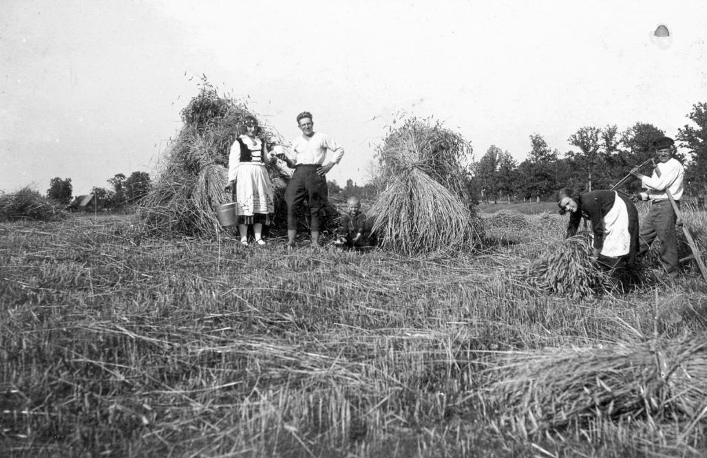 """Nurmuižas pagasta """"Mežbūdās"""" rudzu pļauja ap 1935. g."""