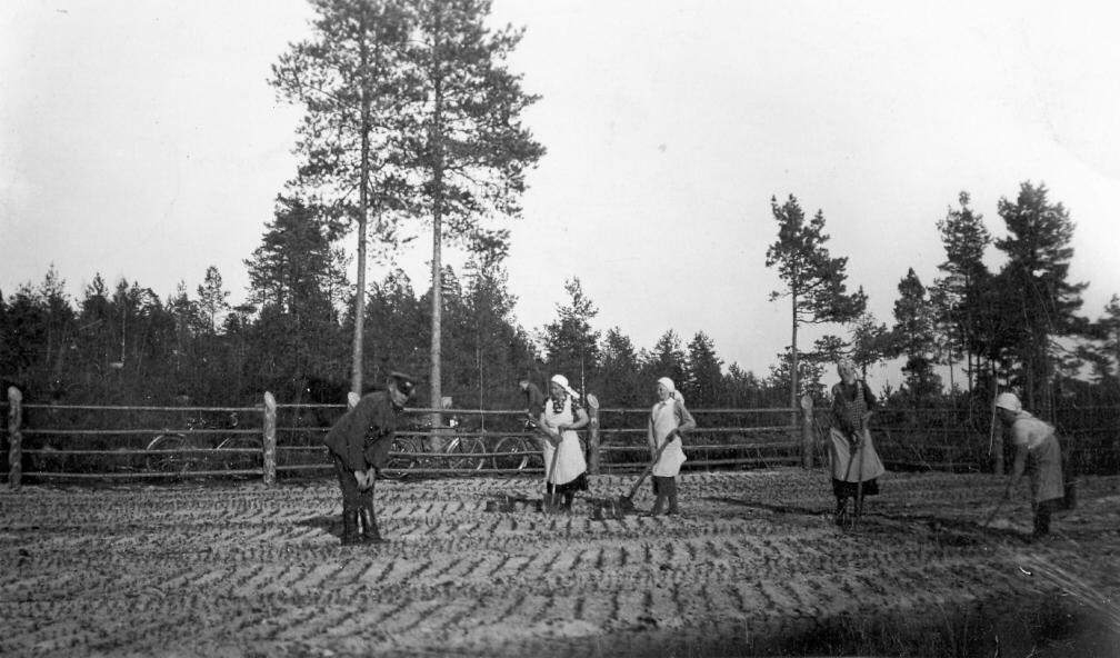Darbi Pļavu mežniecības stādaudzētavā 1930. gados.
