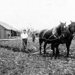 Zemes aršana Ārlavas pagastā ap 1926. g.
