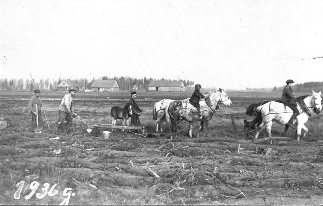 """Zemes aršana, uzplēšot atmatu Ārlavas pagasta """"Kraujās"""", 1936. g."""