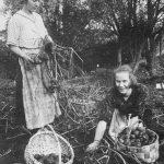 Minna Podniece, rokot kartupeļus, 1920. gados.