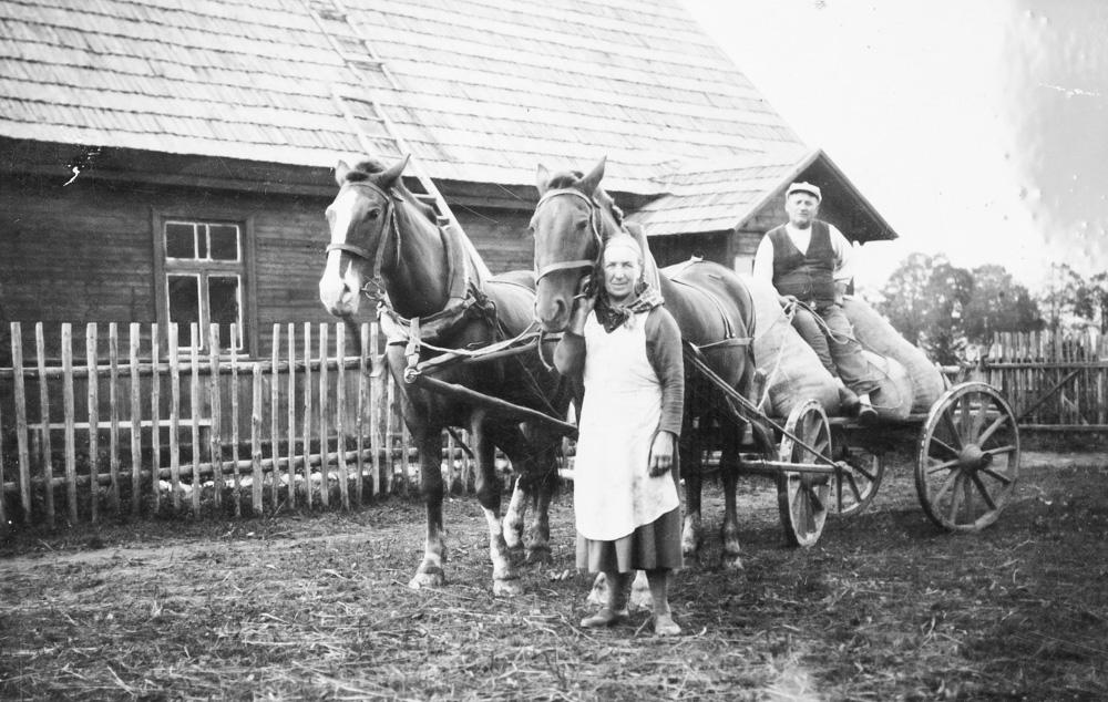 Labības vezums Ērķa jaunsaimniecībā Pastendē 1930. gados