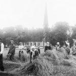 Labības pļaušana pie Nurmuižas baznīcas 1930. gados