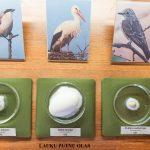 Izstādē apskatāmas 26 putnu sugu olas.
