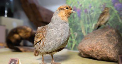 Gada putns, gada dzīvnieks